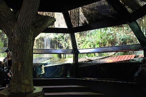 Submerged forest nausicaa