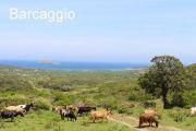 barcaggio-goats