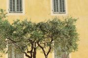 house-and-olive-tree