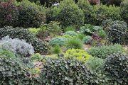garden-planting-detail
