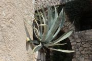 cactus-in--wall
