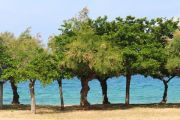 trees-behind-beach