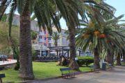 palm-trees-promenade