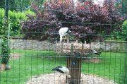 rouffach-stork-park-(2)