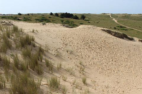 Les dunes de sable à Saint-Hilaire-de-Riez