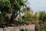 plants-in-village